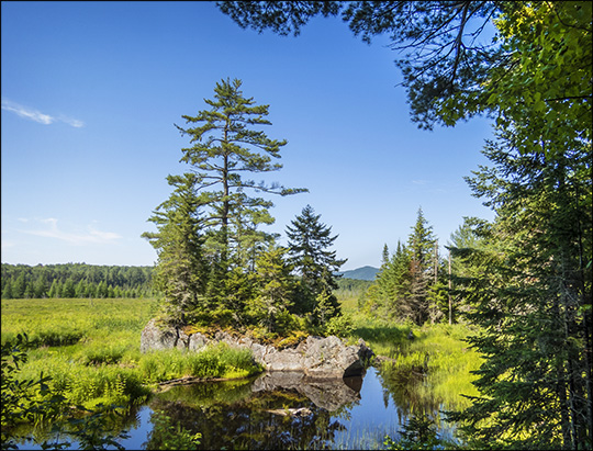Adirondack Wetlands:  Heron Marsh from the Barnum Brook Trail (12 July 2014)