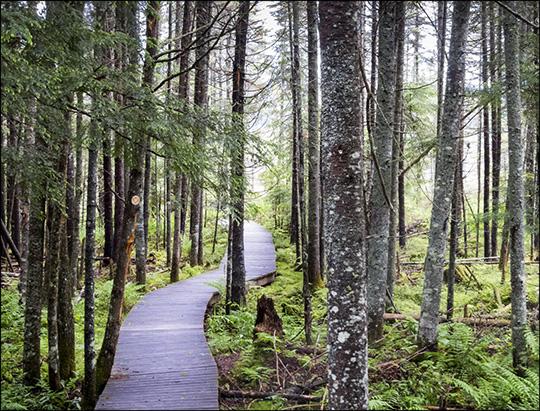 Adirondack Wetlands: Boreal Life Trail boardwalk (14 June 2014)