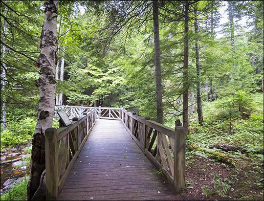 Adirondack Habitats: Conifer/hardwood forest on the Barnum Brook Trail (14 June 2014