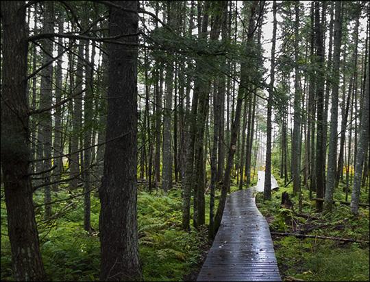 Adirondack Wetlands: Transitional area near Barnum Bog (14 September 2013)