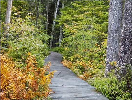 Adirondack Wetlands: Barnum Bog from the Boreal Life boardwalk (14 September 2013)