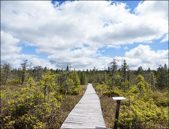 Adirondack Wetlands: Barnum Bog from the Boreal Life Trail boardwalk (17 May 2014)