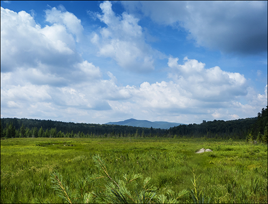 Adirondack Wetlands: Heron Marsh from the Barnum Brook Trail at the Paul Smiths VIC (18 July 2013)