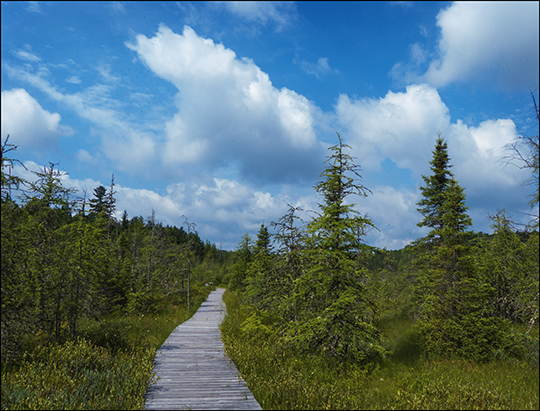 Adirondack Wetlands: Barnum Bog from the Boreal Life Trail at the Paul Smiths VIC (18 July 2013)