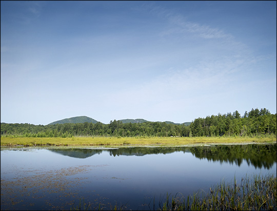 Adirondack Wetlands: Heron Marsh from the Heron Marsh Trail (19 July 2014)