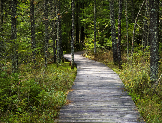 Adirondack Wetlands: Boreal Life Trail boardwalk at the Paul Smiths VIC (22 May 2013)