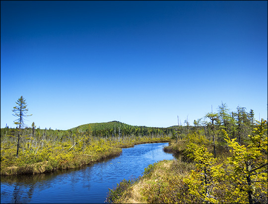 Adirondack Wetlands: Barnum Bog at the Paul Smiths VIC (23 May 2015)