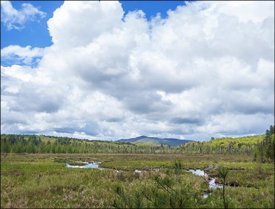 Adirondack Wetlands: Heron Marsh from the Barnum Brook Trail (24 May 2014)