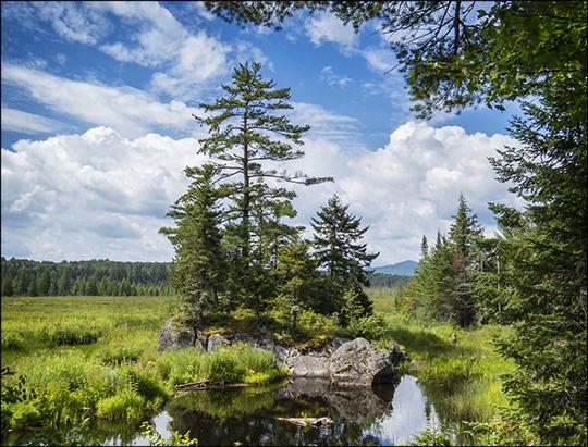 Adirondack Wetlands:  Heron Marsh from the Barnum Brook Trail (26 July 2014)