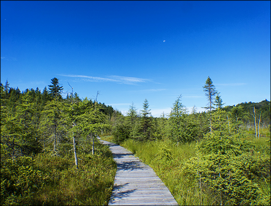 Adirondack Wetlands: Boreal Life Trail board walk on Barnum Bog at the Paul Smiths VIC (27 July 2013)