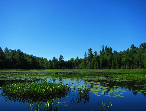 Adirondack Wetlands: Heron Marsh at the Paul Smiths VIC (28 June 2012)