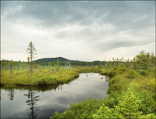 Adirondack Wetlands:  Barnum Bog from the Boreal Life Trail boardwalk (4 July 2015)