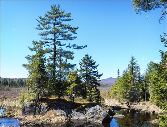 Adirondack Wetlands: Heron Marsh from the Barnum Brook Trail at the Paul Smiths VIC (4 May 2013)