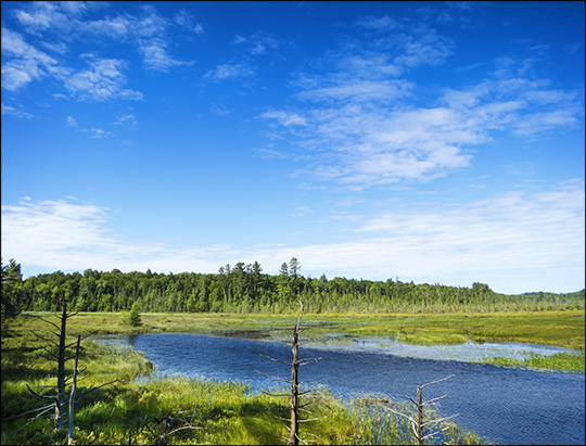 Adirondack Wetlands:  Heron Marsh from the Barnum Brook Trail (5 July 2014)