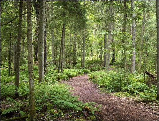 Adirondack Habitats:  Along the Boreal Life Trail at the Paul Smiths VIC (6 July 2013)