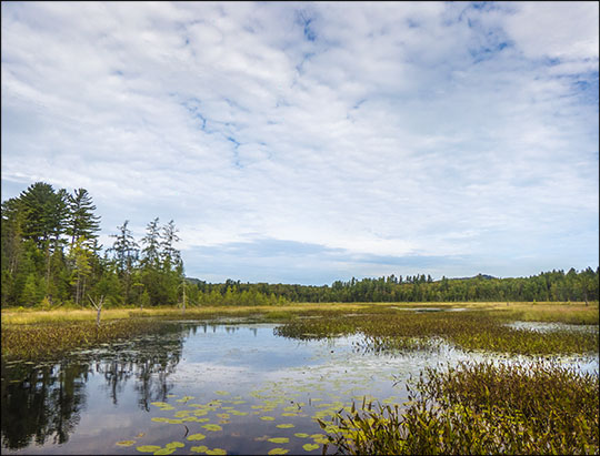 Adirondack Wetlands: Heron Marsh from the floating bridge (7 September 2013)