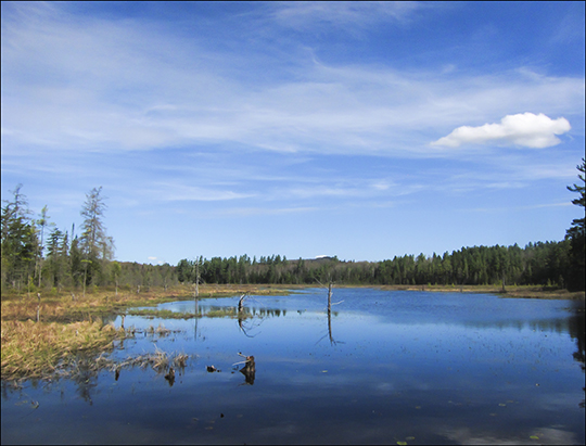 Adirondack Wetlands:  Heron Marsh from the Floating Bridge on the Silviculture Trail at the Paul Smiths VIC (8 May 2013)