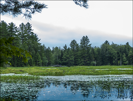 Adirondack Wetlands:  Heron Marsh at the Paul Smiths VIC (20 July 2013)
