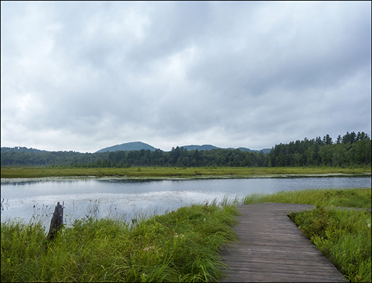 Adirondack Wetlands:  Heron Marsh Trail Overlook (20 July 2013)