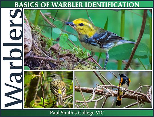 Birds of the Adirondacks: Basics of Warbler Identification (20 June 2015)