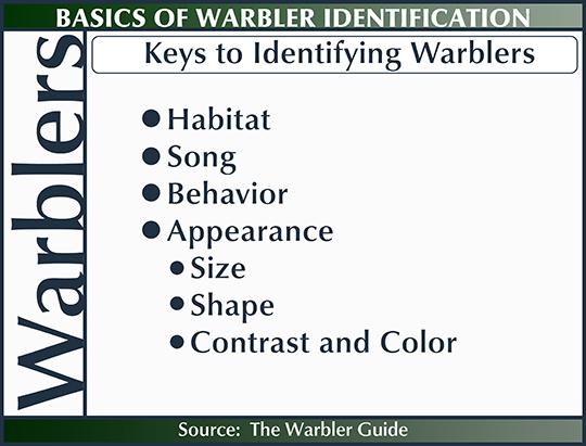 Birds of the Adirondacks:  Keys to Identifying Warblers (20 June 2015)