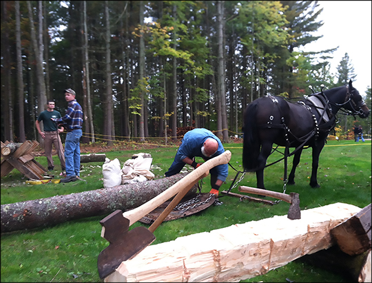 Paul Smith's College Draft Horse Team: Low Impact Logging (29 September 2012)