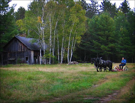Horses on the Homestead: The Original Tractor (29 September 2012)