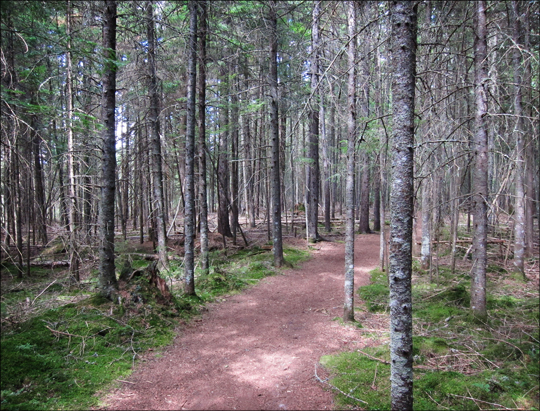 Upland path on the Boreal Life Trail at the Paul Smiths VIC