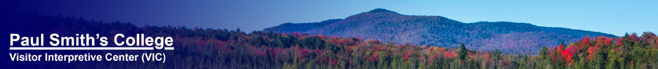 Saint Regis Mountain from the Barnum Brook Trail at the Paul Smiths VIC (26 September 2013)