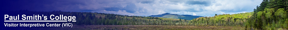 Adirondack Wetlands: Saint Regis Mountain and Heron Marsh (24 May 2014)