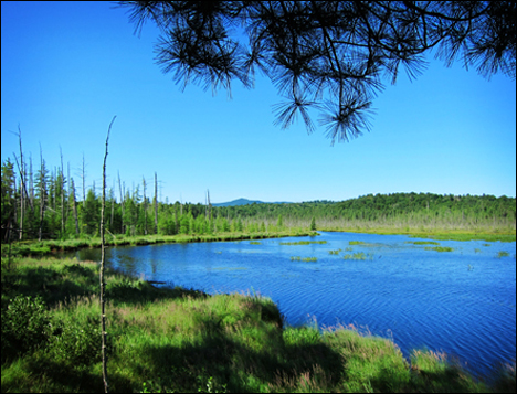 Adirondack Habitats:  Saint Regis Mountain from the Barnum Pond Overlook at the Paul Smiths VIC