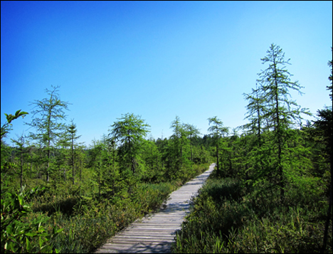 Adirondack Wetlands:  Barnum Bog from the Boreal Life Boardwalk at the Paul Smiths VIC