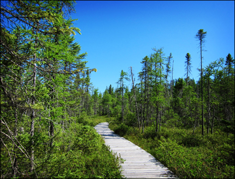 Adirondack Wetlands:  Boreal Life Trail through Barnum Bog at the Paul Smiths VIC