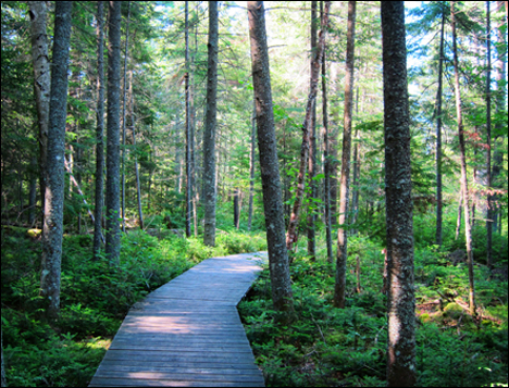 Adirondack Wetlands:  Transition between bog and forest on the Boreal Life Trail at the Paul Smiths VIC