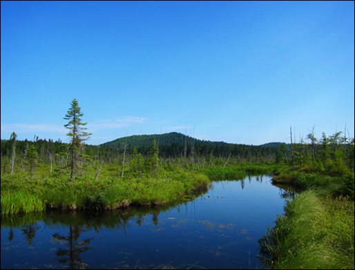 Barnum Brook from the Boreal Life boardwalk at the Paul Smiths VIC (22 July 2011)