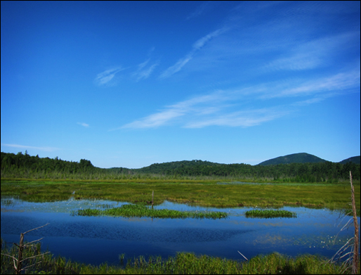 Adirondack Wetlands:  Heron Marsh from the Heron Marsh Trail at the Paul Smiths VIC (22 July 2011)