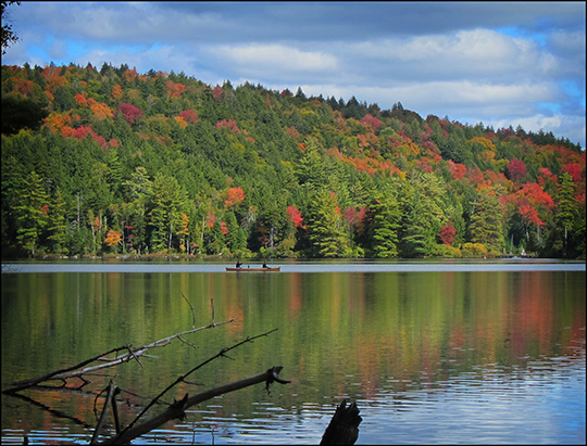 Adirondack Trees:  Fall Foliage from the Black Pond Trail (17 September 2012)