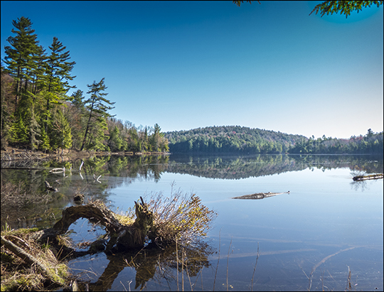 Adirondack Habitats:  View from the Black Pond Trail (4 May 2013)