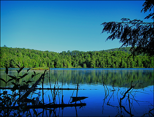 Adirondack Habitats: View from the Black Pond Trail (20 July 2012)
