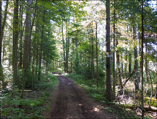 Adirondack Habitats: Mixed forest along the Bobcat  Trail at the Paul Smiths VIC