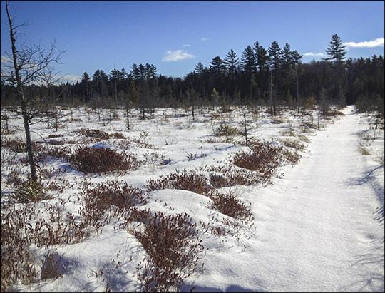 Adirondack Wetlands: Barnum Bog on the Boreal Life Trail