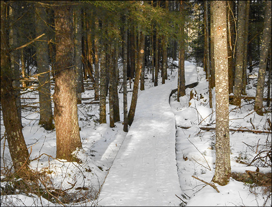 Adirondack Wetlands: Boardwalk through the swamp on the Boreal Life Trail