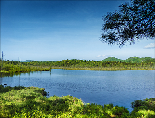 Adirondack Wetland: From the Boreal Life Trail overlook (1 June 2013)