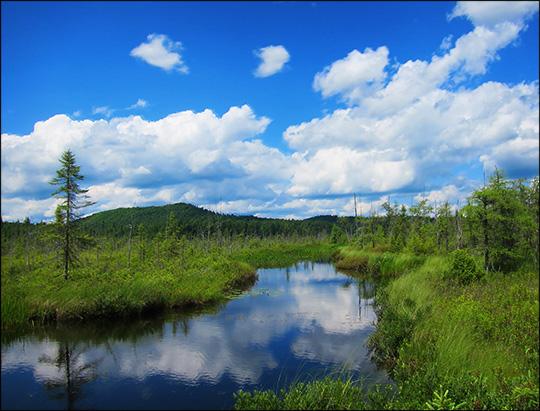Adirondack Wetlands: Barnum Brook and Barnum Bog (10 July 2012)