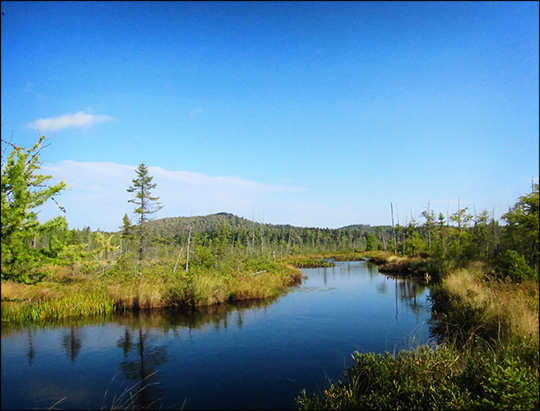 Adirondack Wetlands: Barnum Brook and Barnum Bog (22 September 2012)