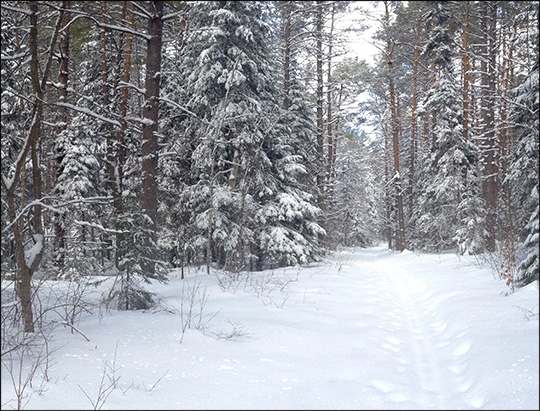 Adirondack Ski Trails: Easy Street Trail in winter.  Photo by Sandra Hildreth. Used by permission
