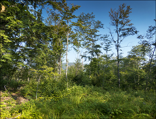 Logged area on the Esker Trail (21 August 2013)
