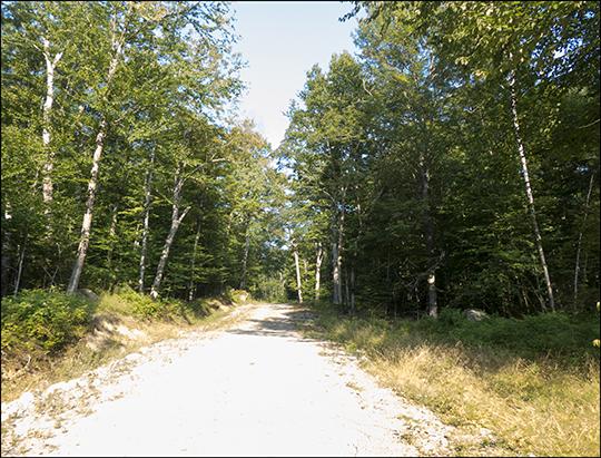 Gravel logging road leading to Log Landing (21 August 2013)
