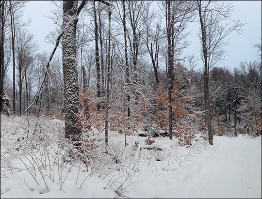 Adirondack Ski Trail: Fox Run Trail in Winter.  Photo by Sandra Hildreth.  Used by permission.