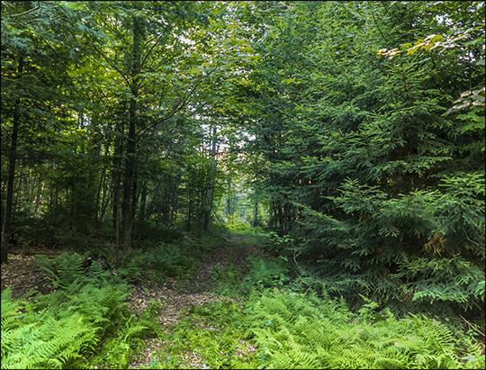 North end of the Fox Run Trail (21 August 2013)